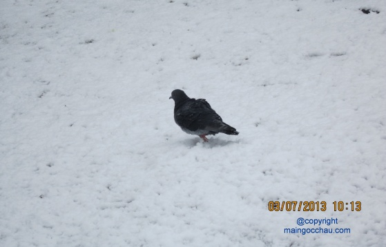 Alone in the snow. Photo is taken in the Boston Common Park in front of my school.