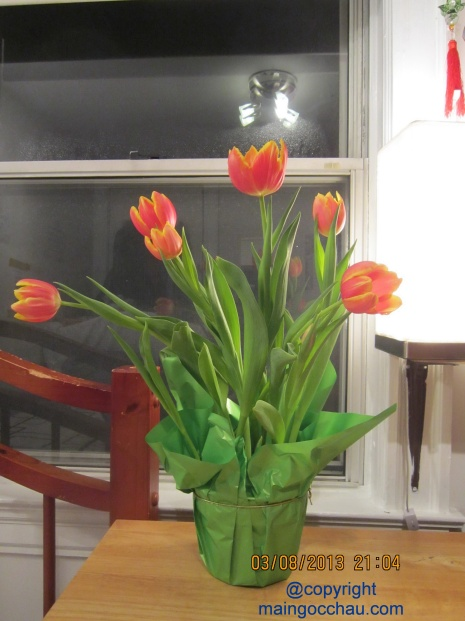Tulips for me and all my girl friends on our March 8.